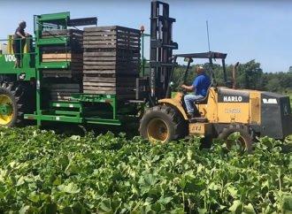 Механізація збору овочевої продукції