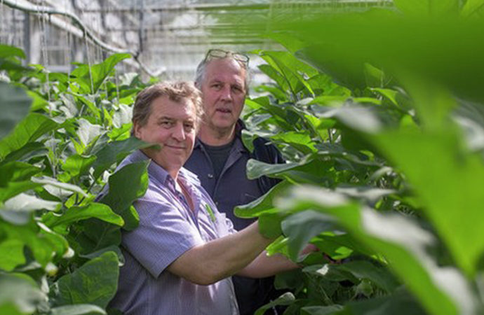 Рійк Цваан розвиває напрямок «органік»