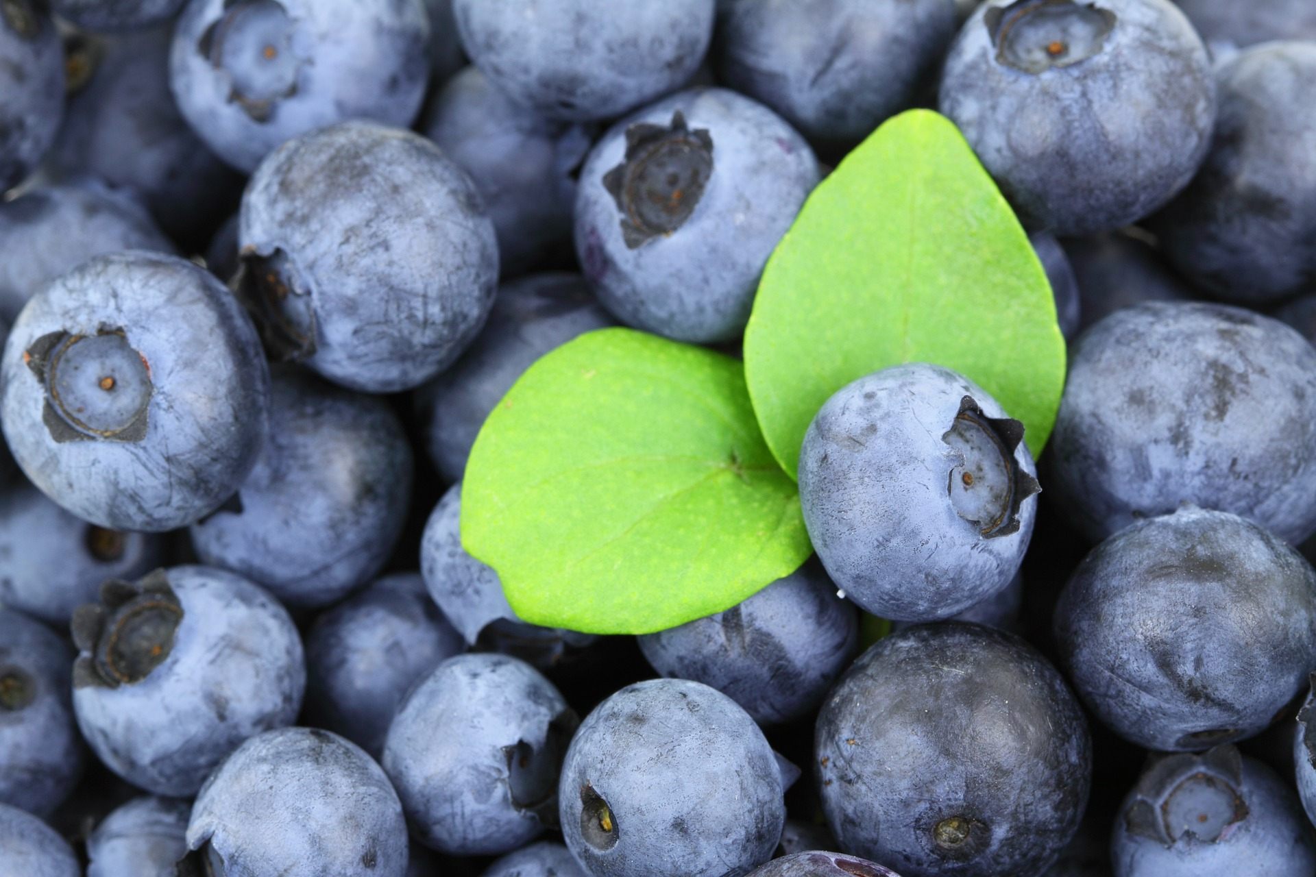 blueberry suppliers on the market