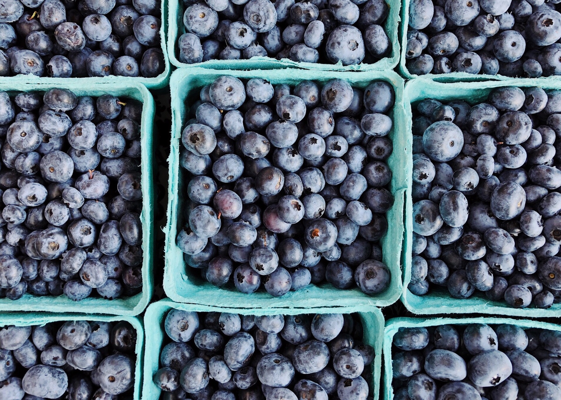 supply of blueberries on the North American market